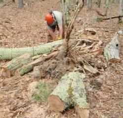 Paul Gosselin running chainsaw